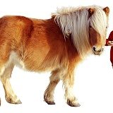 Boy with Shetland pony
