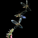 Giant Lacewing taking off multiple image
