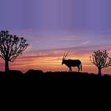 Oryx and Quiver Trees at sunset