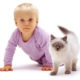 Little girl and Birman-cross kitten