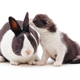 Grey-and-white rabbit and kitten