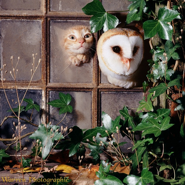 Kitten & owl looking through broken window