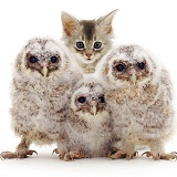 Baby Tawny Owls with kitten