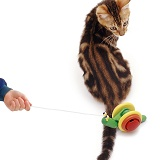 Tabby cat looking round at toy snail