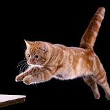 Ginger Cat leaping towards forward 2 3D R