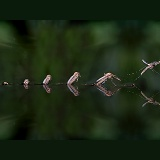 Mosquito hatching sequence