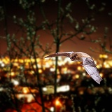 Pipistrelle with Guildford city lights