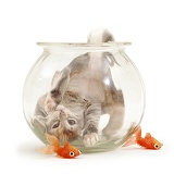 Kitten in a goldfish bowl