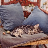 Tabby kitten asleep on blue cushions