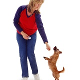 Woman clicker-training a terrier to dance