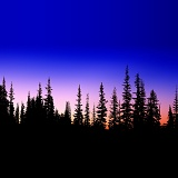 Subalpine firs at sunrise