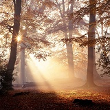 Mist and sunbeams in the New Forest