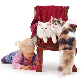 Little girl and cats around a chair