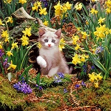 Kitten among Daffodils