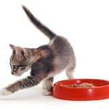 Kitten food covering