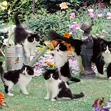 Black-and-white cats in the garden jigsaw