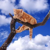 Ginger kitten on a branch