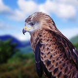 Red Kite portrait