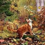 Ginger cat in autumn scene