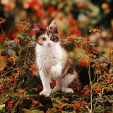 Young cat in Autumn