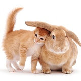 Kitten & Rabbit nuzzling