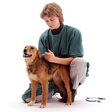 Vet vaccinating a dog