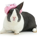 Rabbit in pink hat
