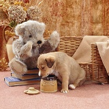 Border Collie pup with honey pot and teddy bear