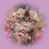 Persian kitten among roses and bellflowers