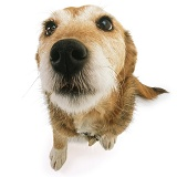Terrier-cross looking up