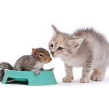 Grey Squirrel and grey kitten