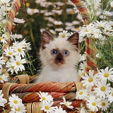 Cat in a basket with daisies