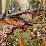 Autumnal woodland jigsaw
