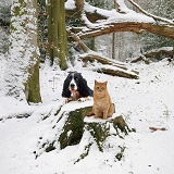Cat and dog in the snow