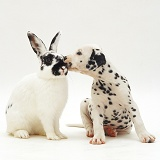 Spotted rabbit and Dalmatian pup