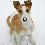 Lurcher in the snow