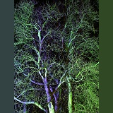 Flood-lit trees
