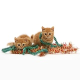 Red tabby kittens with tinsel