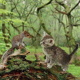 Squirrel and kitten in the woods