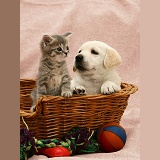 Kitten and puppy in a basket