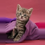 Tabby kitten in child's fleece