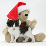 Black-and-white kitten and teddy bear