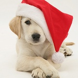 Retriever in a Santa hat