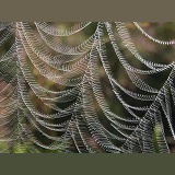 Spider's Web in the wind