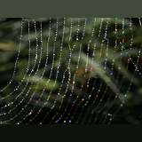 Sunlight refracted by dew drops held in a spider's web