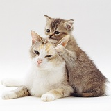 Cute cat and kitten