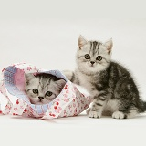Silver tabby kittens with a child's pink cloth bag