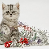 Silver tabby kitten with silver tinsel