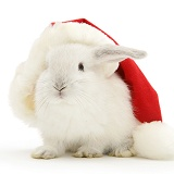 White baby rabbit in a Santa hat