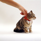 Cat with newly fitted collar